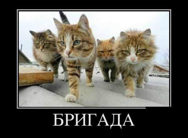 смешные картинки винкс с надписями