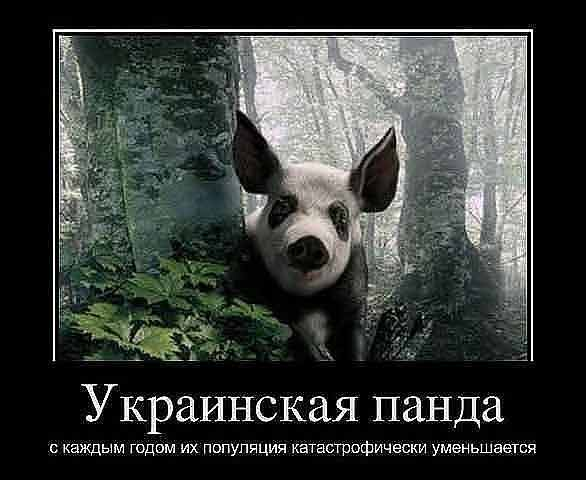 ... торрент политики украины приколы: katusmex.orgfree.com/49.php